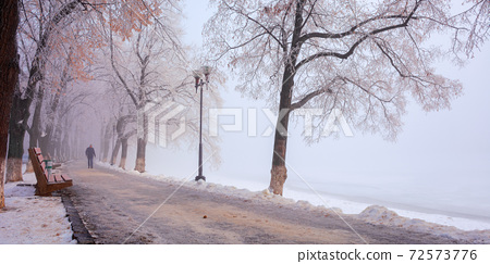 trees in mist on a frosty morning. wonderful urban scenery in wintertime. location linden alley on the embankment of river uzh 72573776