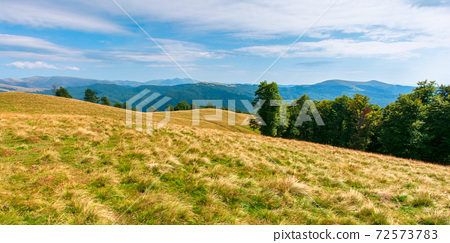 yellow grass on the meadow in mountains. beautiful nature landscape beneath a blue sky with fluffy clouds at high noon. 72573783