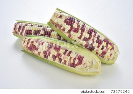 彩色玉米,玉米,食物,農業,農作物 72579246