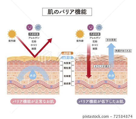 皮膚 人體皮膚 斷面圖 72584874