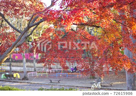 駒澤公園秋秋葉遊樂設備 72615986