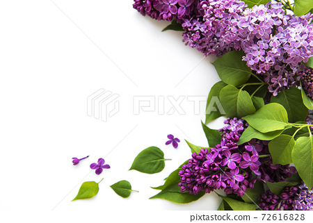 Lilac in flat style on white background.  72616828