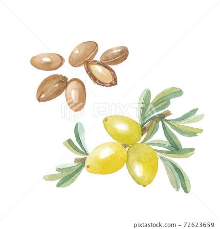 摩洛哥堅果水果和種子 72623659