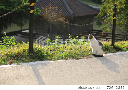 black and white cat on the trails 72642831