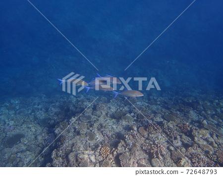 오키나와 현 온 나손 마에다 갑의 투명한 바다를 헤엄 치는 물고기 72648793
