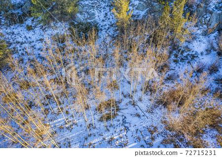 aspen grove in winter scenery - aerial view 72715231
