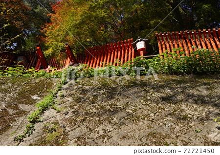 島根縣津和野町Taikoya Inari Shrine的Senbon Torii 72721450