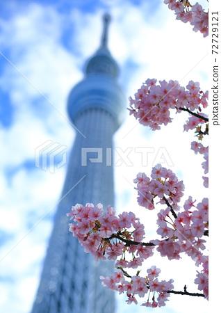 櫻花和東京天空樹 72729121