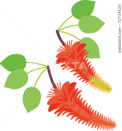 Deigo blooming in Okinawa 72734520