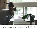 cat on sofa near window 72740143