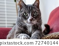 cat poses perfectly 72740144