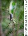 close-up black poisonous spider 72740152