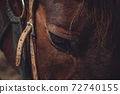 close-up of horses face 72740155