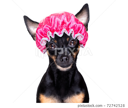 dog at the  hairdressers 72742528