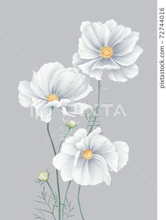 色彩豐富的花卉素材組合和設計元素 72744016