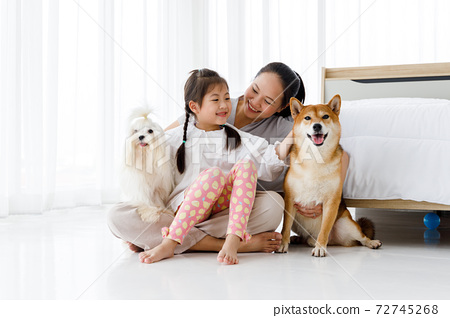 Happy Asian mother and daughter sitting on bedroom floor with Maltese and Shiba Inu. 72745268