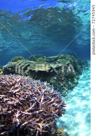 산호초 72745945