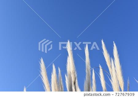 푸른 하늘 아래의 빤빠스구라스 72767939