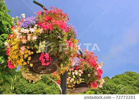 Flower basket planter in Echigo Hillside Park 72772201