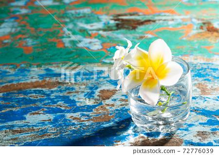 熱帶花卉 72776039