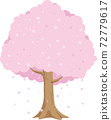櫻桃樹 72779617