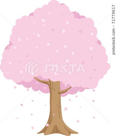 벚꽃 나무 72779617
