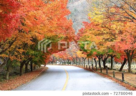 가을여행,가을풍경,국립공원 72780046