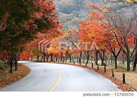 가을여행,가을풍경,국립공원 72780050