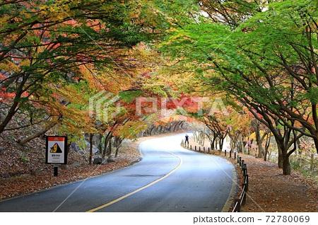 Autumn trip, autumn scenery, national park 72780069