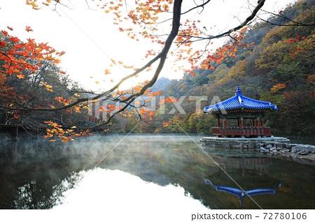 Autumn trip, autumn scenery, national park 72780106
