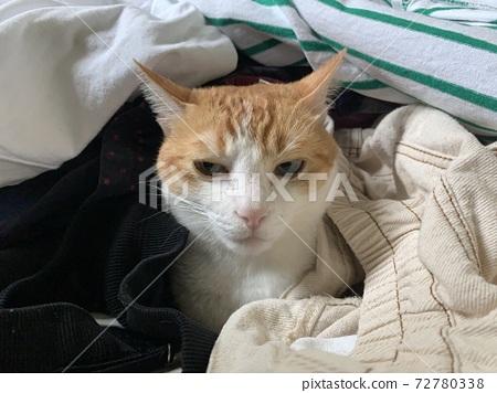 grumpy face cat 72780338