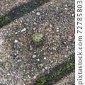 Cetoniinae sitting on the road 72785803