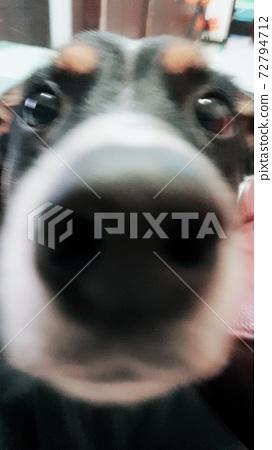 Dog 72794712