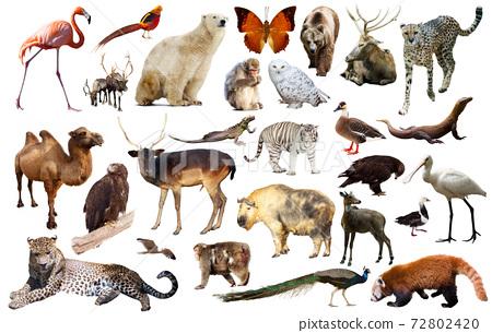 asia animals isolated 72802420