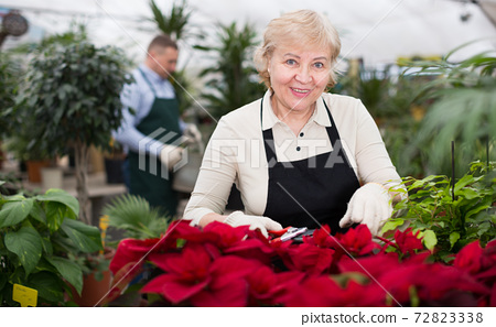 Adult woman is pruning blooming flowers on her work place 72823338