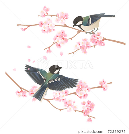 Vector illustration of a cute wild bird tit perching on a branch of cherry blossoms 72829275