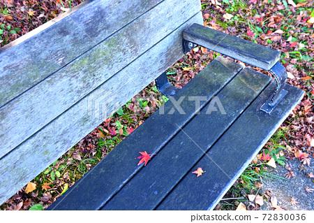 공원 벤치에 떨어지는 단풍 단풍 나무 72830036