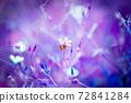 히메후우로과 보라색 핑크 계열 백 72841284