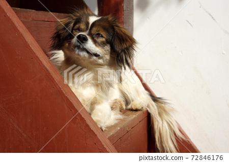 sleep dog on the stair 72846176