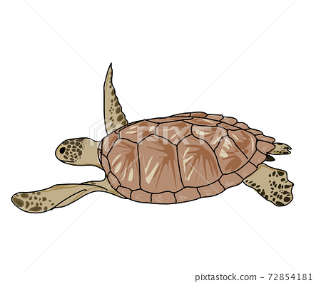 Turtle swimming  72854181