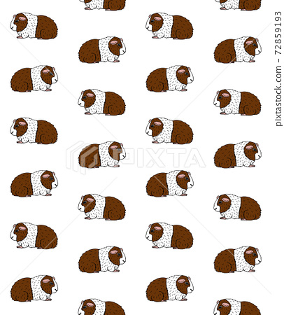 Vector seamless pattern of colored Guinea pig 72859193
