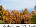 Autumn leaves of Karamatsu 72861548