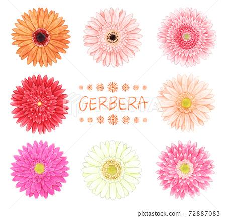 8種非洲菊插圖 72887083