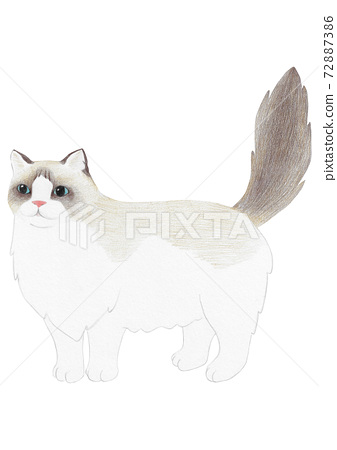 렉돌 고양이 72887386