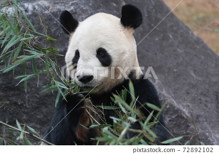 Panda 72892102