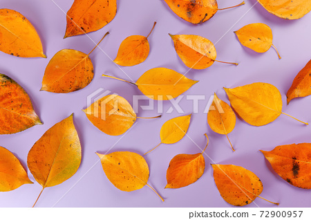 Orange coloured autumn leaves on lilac board, closeup top down view 72900957