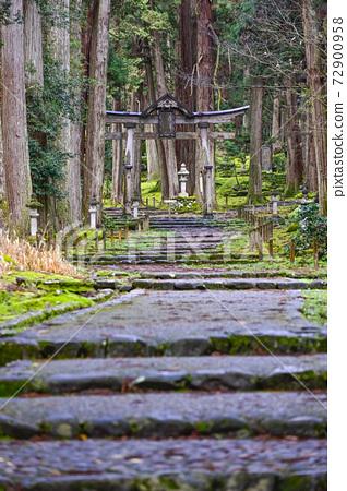 Moss-covered Heisenji Hakusan Shrine approach (Katsuyama City, Fukui Prefecture) 72900958