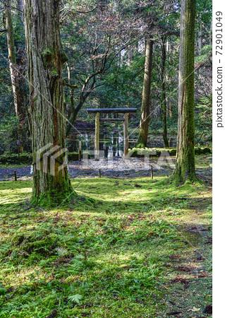 이끼 낀 平泉寺 하쿠산 신사 미타라이 연못 (후쿠이 현 가쓰 야마시) 72901049