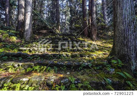 Moss-covered Heisenji Hakusan Shrine precincts (Katsuyama City, Fukui Prefecture) 72901225
