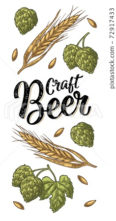 Ears of barley, leaves and cones of hops engraving. Craft Beer lettering. 72917433